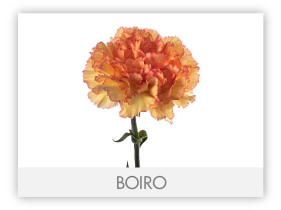 BOIRO10