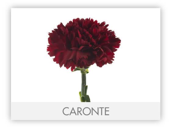 CARONTE10