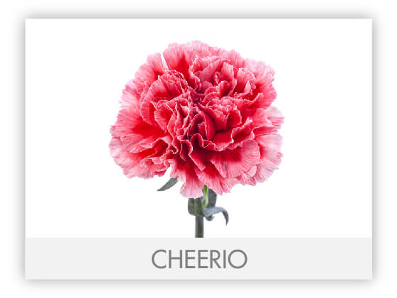 CHEERIO10