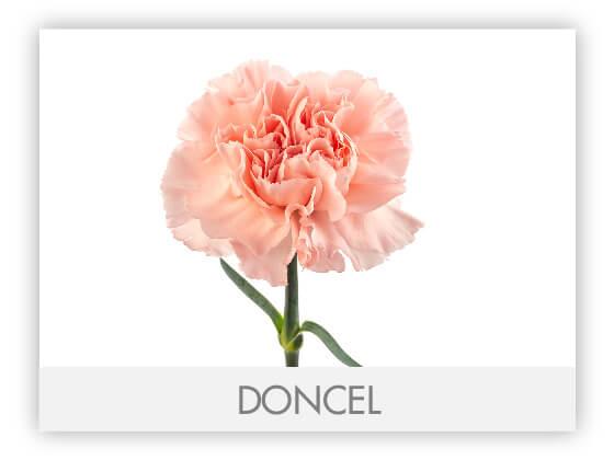DONCEL10