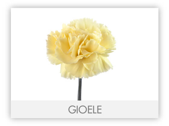 GIOELE10