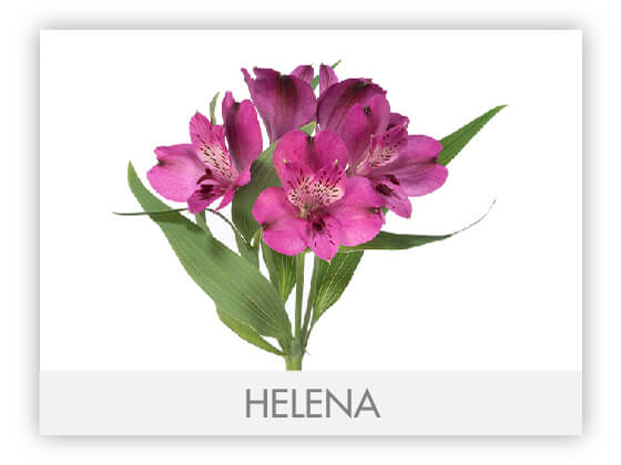 HELENA10