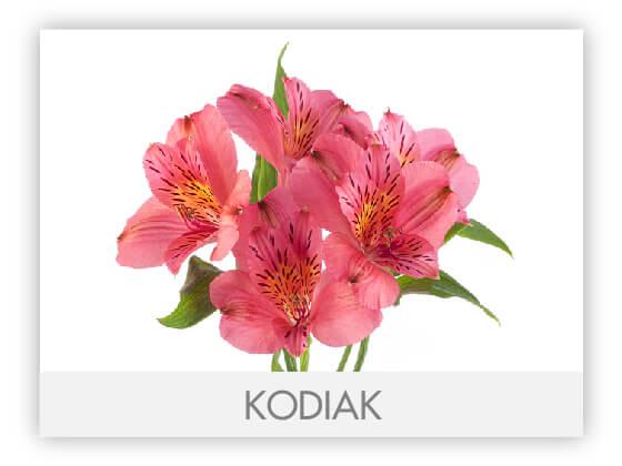 KODIAK10