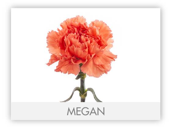 MEGAN10