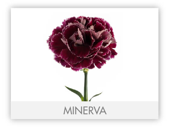MINERVA10