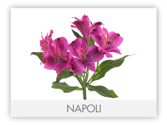 NAPOLI10