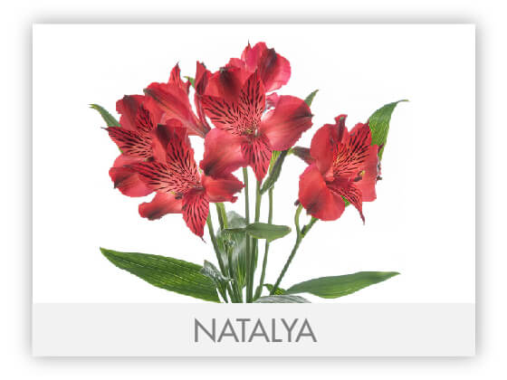 NATALYA10