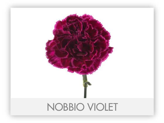 NOBBIO VIOLET 10