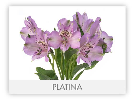 PLATINA10