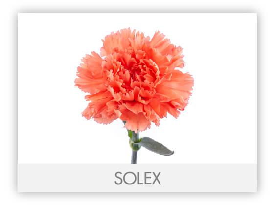SOLEX10
