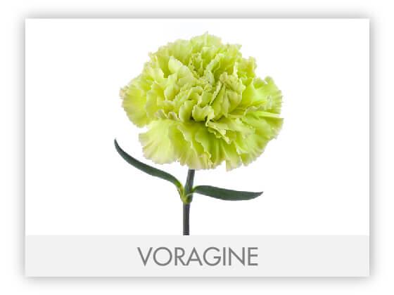 VORAGINE10