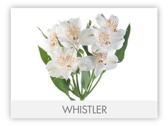 WHISTLER10