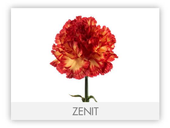 ZENIT10