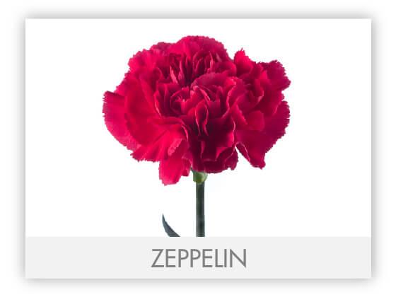 ZEPPELIN10