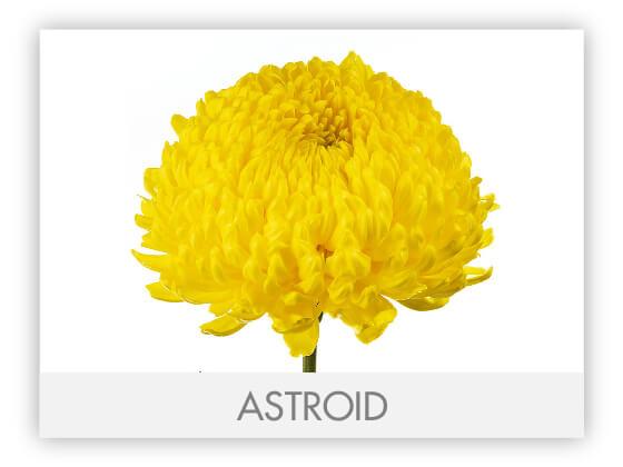 ASTROID101