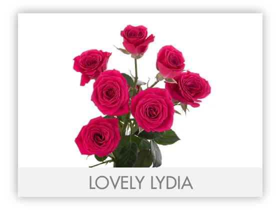 LOVELY LYDIA