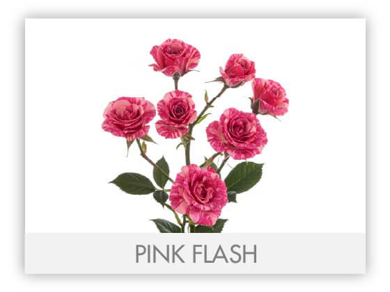 PINK FLASH