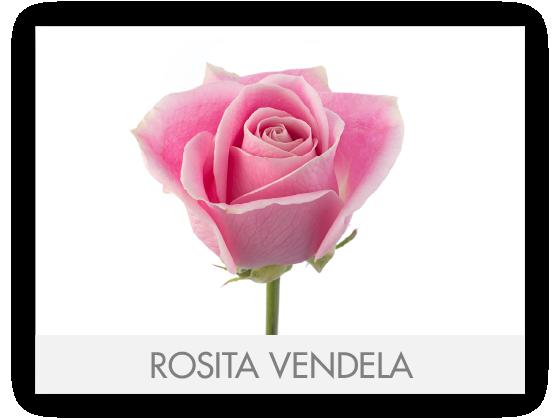 ROSITA VENDELA