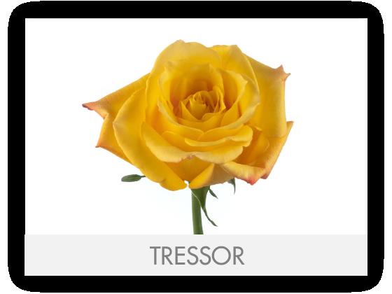 TRESSOR