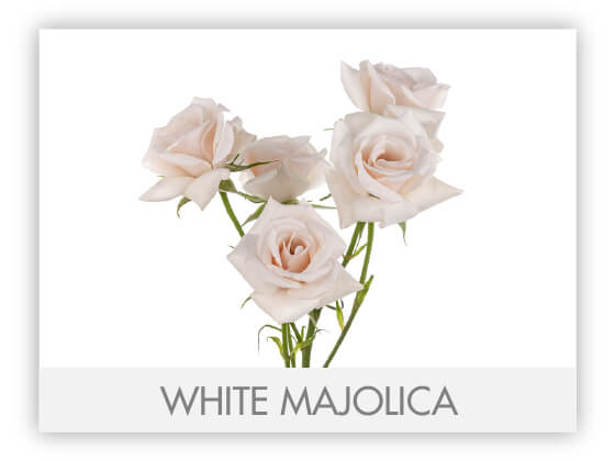 WHITE MAJOLICA