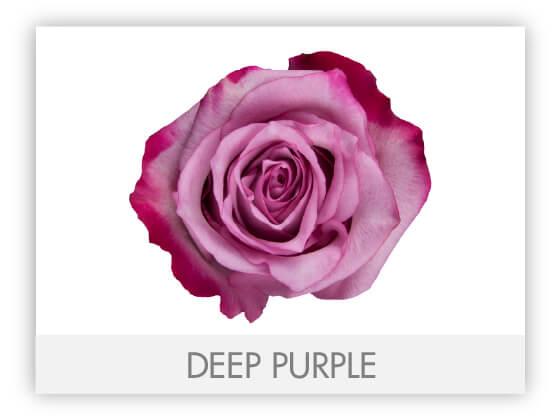 DEEP PURPLE 10