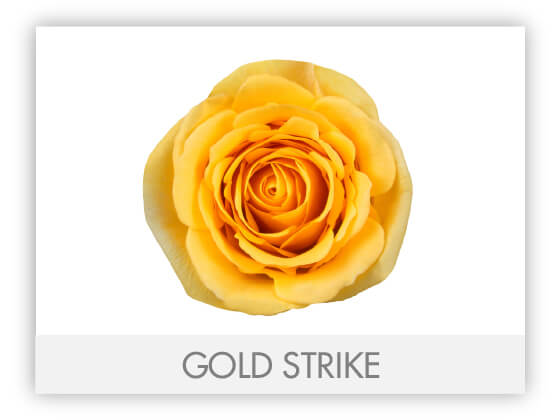 GOLD STRIKE 10