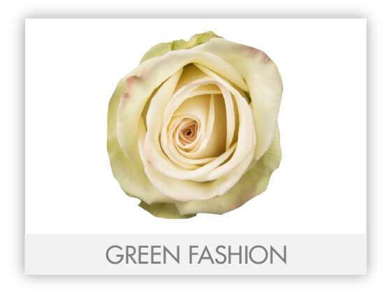 GREEN FASHION 10