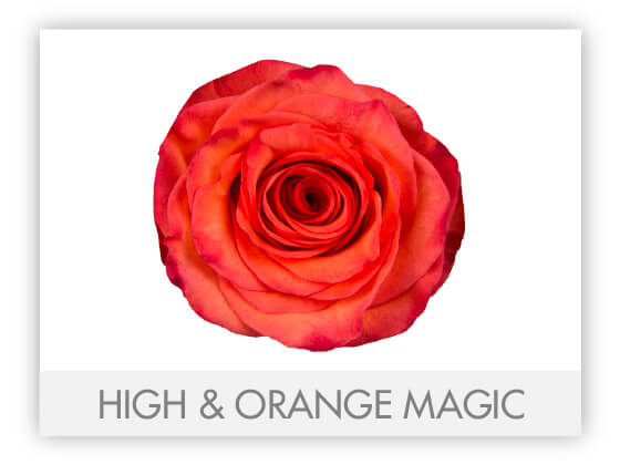 HIGH&ORANGEMAGIC