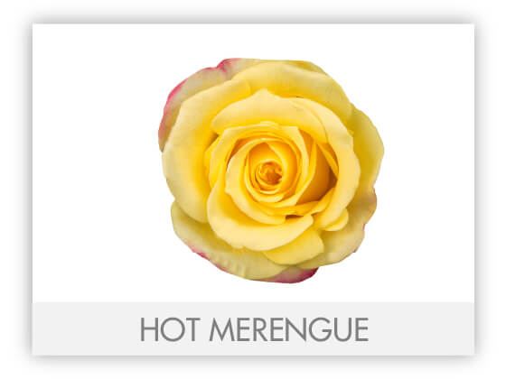 HOT MERENGUE 10