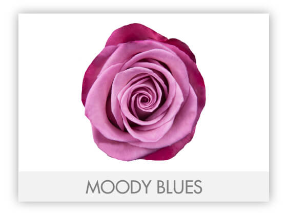 MOODY BLUES 10