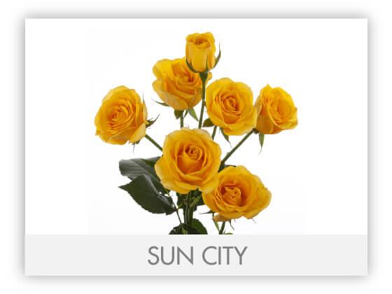 SUNCITY1