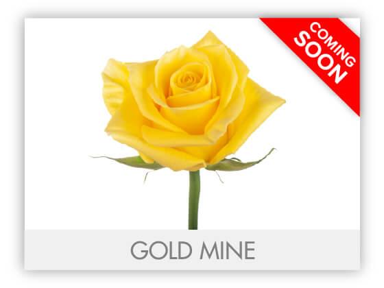 GOLD MINEGLLRY