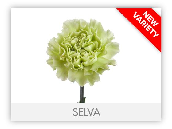 SELVA-GALLERY-NEW1