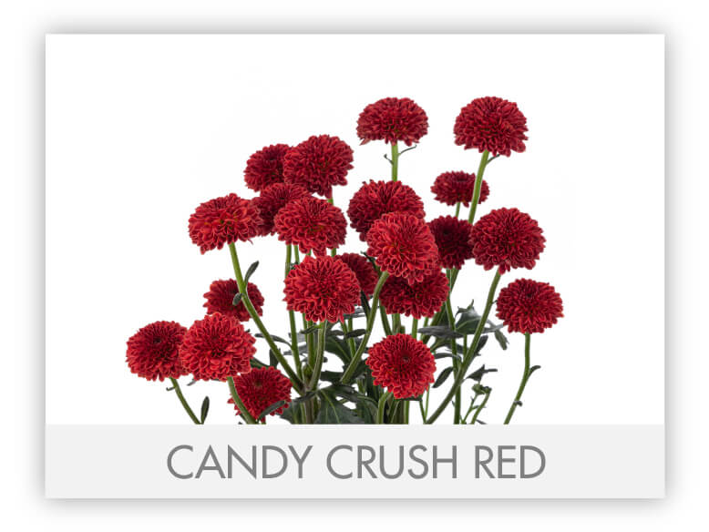 CANDY CRUSH RED