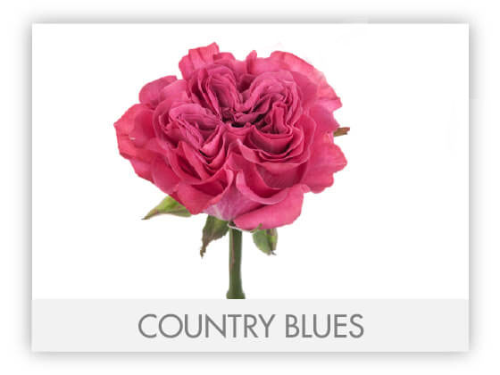 COUNTRY BLUESGLLRYg2