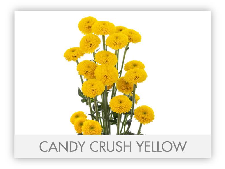 Candy Crush Yellow