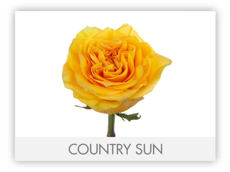 Country Sun-N