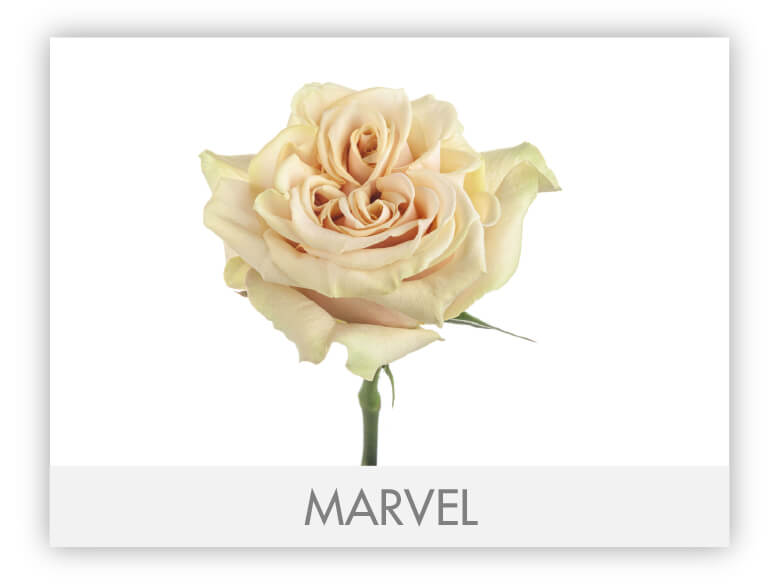 Marvel-N