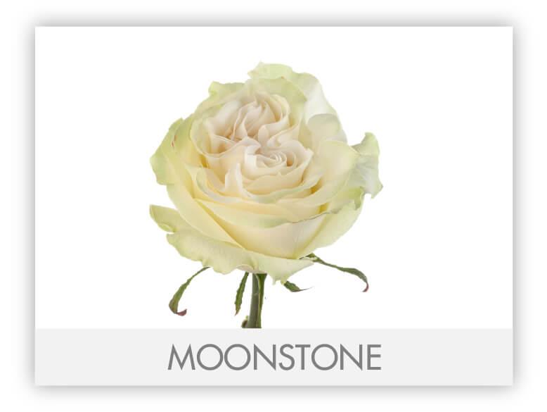 Moonstone-N