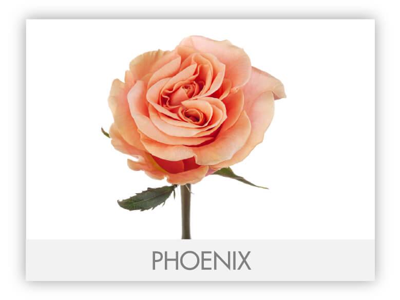 Phoenix-N