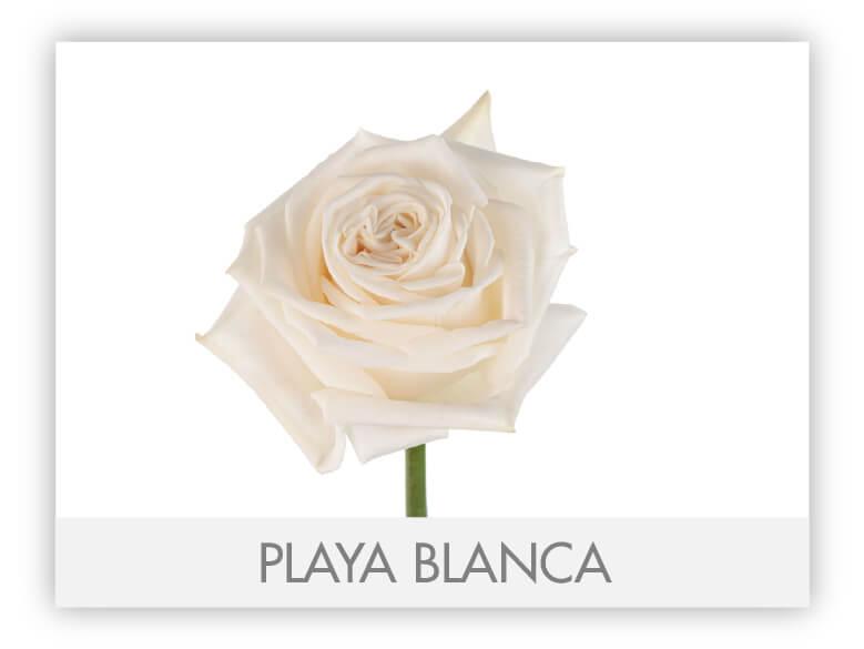 Playa Blanca-N