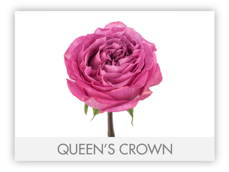 Queen´s Crown-N