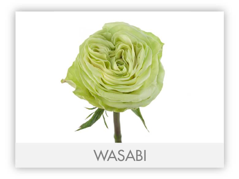 WASABI-N